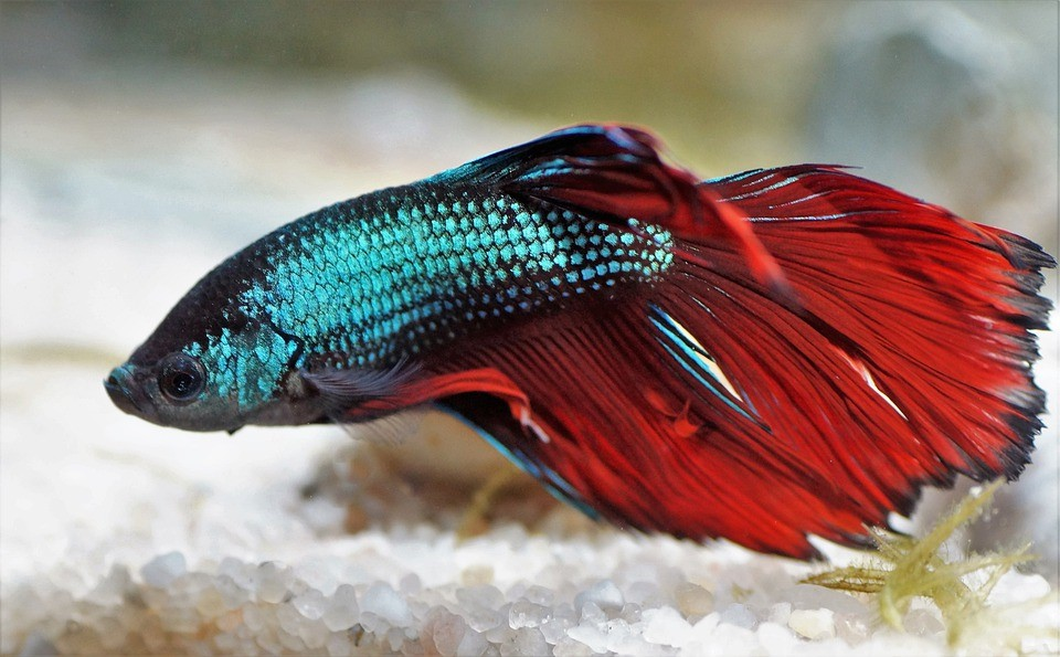 Best Substrate For Betta
