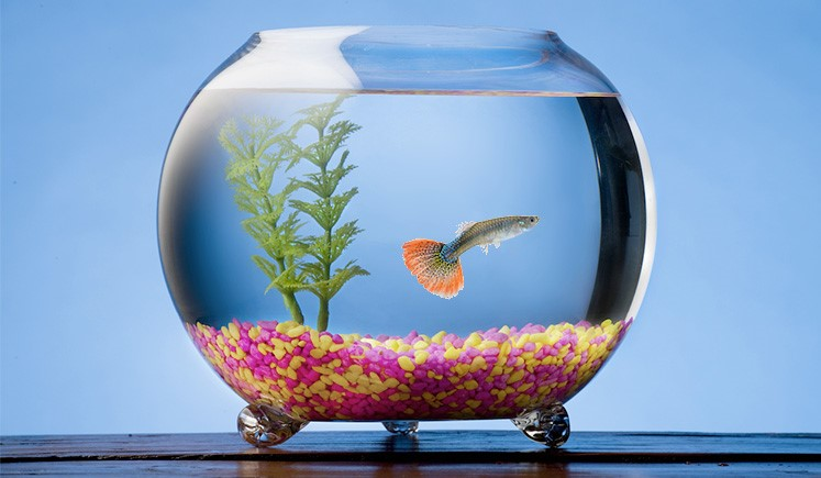 What fish can live in a bowl without oxygen