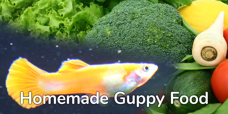 Best Home-Made Food For Guppies