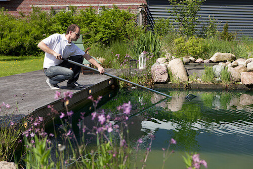 Clean the pond to prepare for the winter