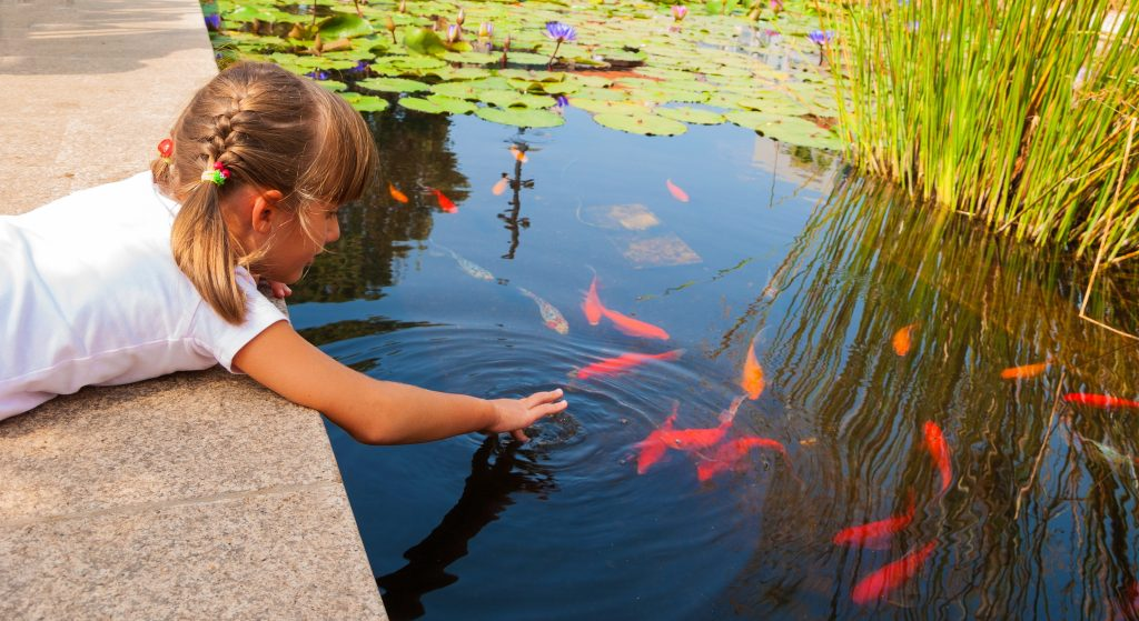 There are some factors determining how often you should feed your goldfish